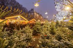 Sapin de Noël: le «roi des forêts» n'est pas près d'être détrôné