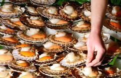 Fête de la coquille Saint-Jacques, les meilleurs produits marins en direct des Côtes-d'Armor