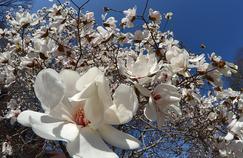 De beaux arbustes pour les sols acides
