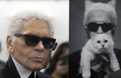 Choupette peut-elle devenir l'héritière de Karl Lagerfeld?