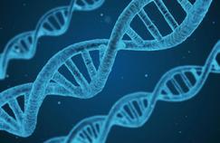 La création d'ADN artificiel qui complexifie le vivant