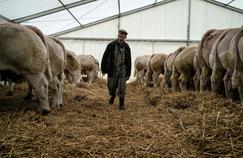 L'épuisement professionnel guette un agriculteur sur trois en Saône-et-Loire