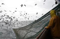 Brexit: les pêcheurs français menacés de chômage technique