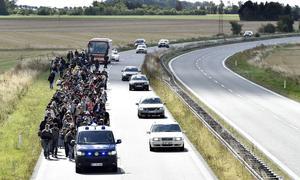 Certains réfugiés ont tenté d'atteindre Copenhague à pied, espérant atteindre la Suède par la suite.