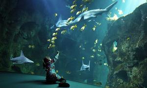 L'Aquarium deLaRochelle.