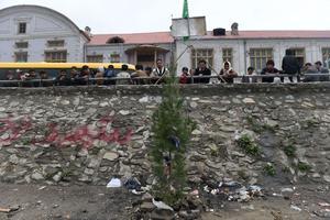 Le sapin planté à Kaboul sur les berges de la rivière où a été lynchée Farkhunda, accusée à tord d'avoir brûlé le coran.
