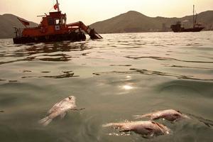 Des carcasses de poissons en décomposition sont récupérés à Hong Kong.