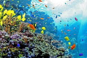 Découvrir les nombreuses espèces de poissons du Georgia Aquarium.