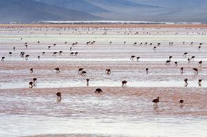 Laguna Colorada en Bolivie