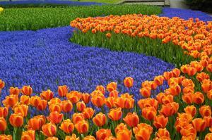 Le parc floral Keukenhof aux Pays-Bas