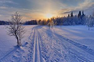 Les plaines enneigées de la Laponie.