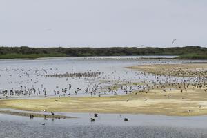 La Baie de Somme accueille des milliers d'oiseaux migrateurs chaque année.