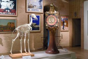 Les animaux du Muséum mis en scène par Wajdi Mouawad au château des Ducs de Bretagne.