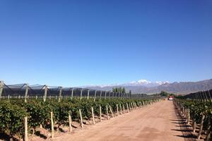 Le site de production de Chandon à Mendoza
