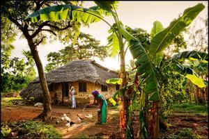 Pemba a gardé ses villages traditionnels avec leurs maisons d'adobe recouvertes de paille de coco tressée: efficace contre la chaleur. Ici, dans la pointe nord de l'île, près de Makangale.
