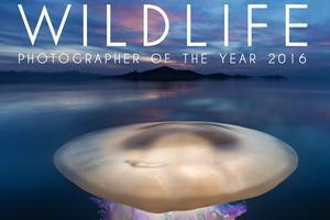 Parmi 50.000 clichés en compétition, 100 photographies sont sélectionnées et regroupées dans un ouvrage aux éditions Biotope.