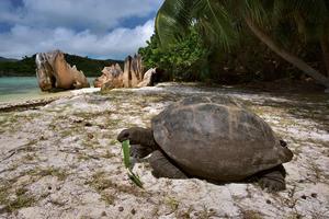 Une paix retrouvée pour les tortues géantes.