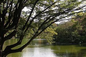 Parc Montsouris (XIVe).