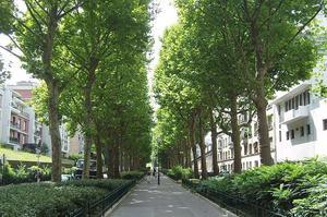Avenue René-Coty (XIVe).