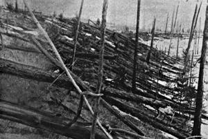 Arbres couchés par l'explosion de la Tungunska, photo prise 19 ans après, en 1927.