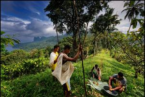 La plantation de Terreiro Velho, dans le sud de l'île de Principe