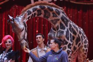 La princesse Stéphanie nourrissant une girafe.