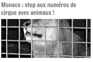 Capture d'écran du site internet du «Collectif animalier du 06».