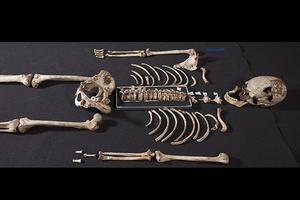 Le squelette de Cheddar Man.