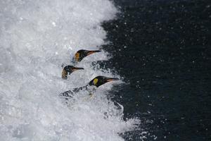 Les oiseaux sont obligés de faire des allers-retours de plus en plus longs pour se nourrir.