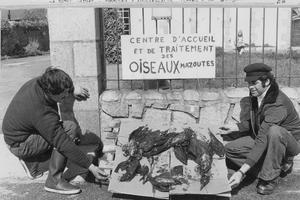Deux hommes mettent en scène des oiseaux marins tués par les eaux polluées par les hydrocarbures au large de la côte bretonne, le 31 mars 1978.