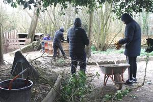 Trois tigistes s'activent aux quatre coins de la ferme pour couper les branches mortes des arbustes.