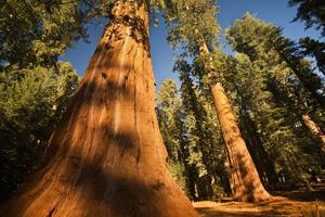 Le Sequoia National Park - Californie