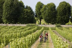 Scandibérqiue; randonnée à VTT dans les vignes, dans le Nord de la Gironde.