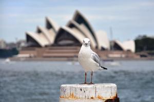 L'opéra de Sydney - Australie