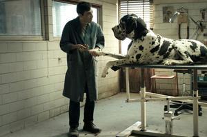 <i>Dogman,</i> avecMarcello Fonte, Prix d'interprétation masculine au dernier Festival deCannes.