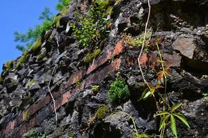 La suppression des végétaux fait partie des travaux à entreprendre sur les restes de l'aqueduc.