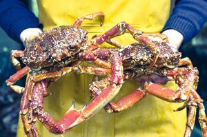 Les crabes de Juste.