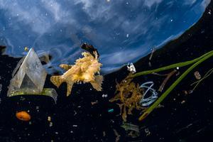 Greg Lecœur a été primé dans la catégorie Photojournaliste du Wildlife Photographer of the Yea, pour sa photo intitulée «La vie malgré tout».