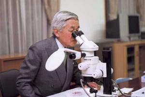 L'empereur Akihito étudie les gobies, en 2009. Photo du ministère japonais des affaires étrangères.