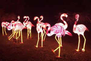 Rencontre nocturne avec un groupes de flamands roses, plus vrais que nature, dans la ménagerie du Jardin des Plantes.