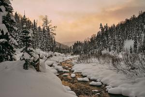 Une forêt boréale dans le massif de l'Altaï.