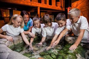 À l'aquarium Sea Life (77), les bassins sont à la taille des enfants.