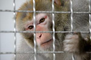 Un macaque.