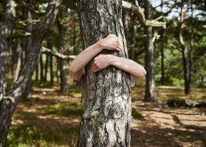 Humer le parfum de la forêt calme et apporte une détente maximale.