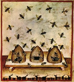Des ruches dans une illustration du <i>Taccuinum sanitatis</i>, traité médiéval.
