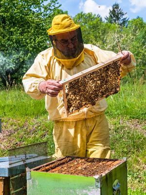 Les abeilles apprécient la présence de l'homme.