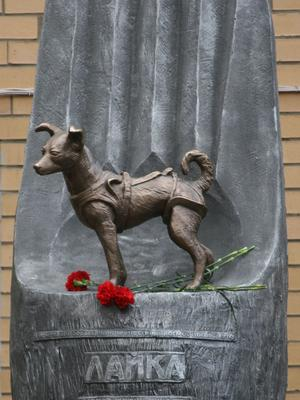 Un monument à la mémoire de la chienne Laïka est érigé à Moscou.