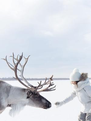 Le renne, animal exotique.