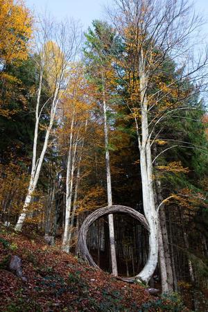 Arc de tiges adossé à un arbre, conçu par Paul Feichter qui souligne la courbure naturelle du tronc et vient compléter son mouvement en bouclant le cercle.