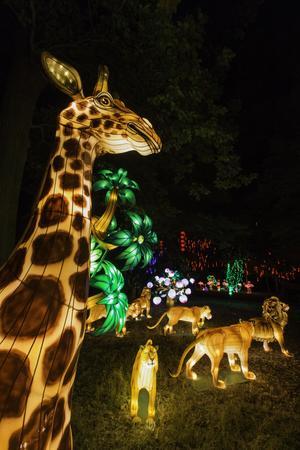 Lanternes chinoises au zoo de Thoiry (78).